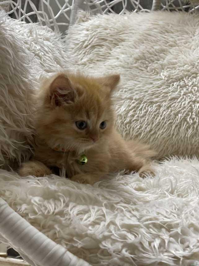 قطة شهرين الخرج
