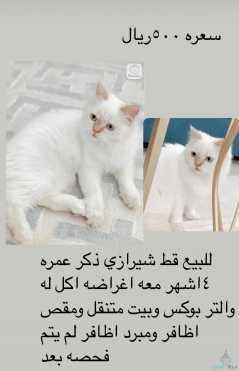 قطه مع جميع حاجاته