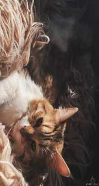 للبيع قطة شيرازية عمرها ٤ شهور معها دفتر تطعيم ومتعوده على الليتر بوكس  القطة تحب الأطفال ولعوبة جداً وخالية من الأمراض  مسيومه ب ٥٥٠