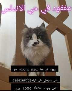 قط مفقود في حي الاندلس