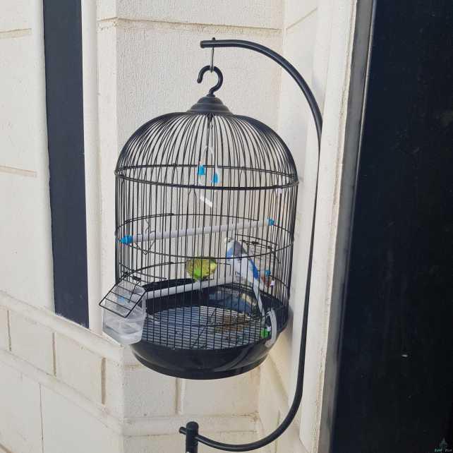طيور للبيع مع القفص والحامل الي يتعلق فيه القفص وكيلو حب